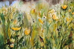 Buddon-Meadow