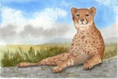 cheeta-watercolour