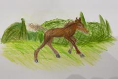 Olly-foal