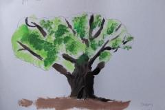 major-oak-by-Sam