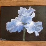 Pat Holland flower
