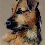 Jill Whitehouse border terrier