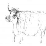 Cow pen sketch Peter Hollis