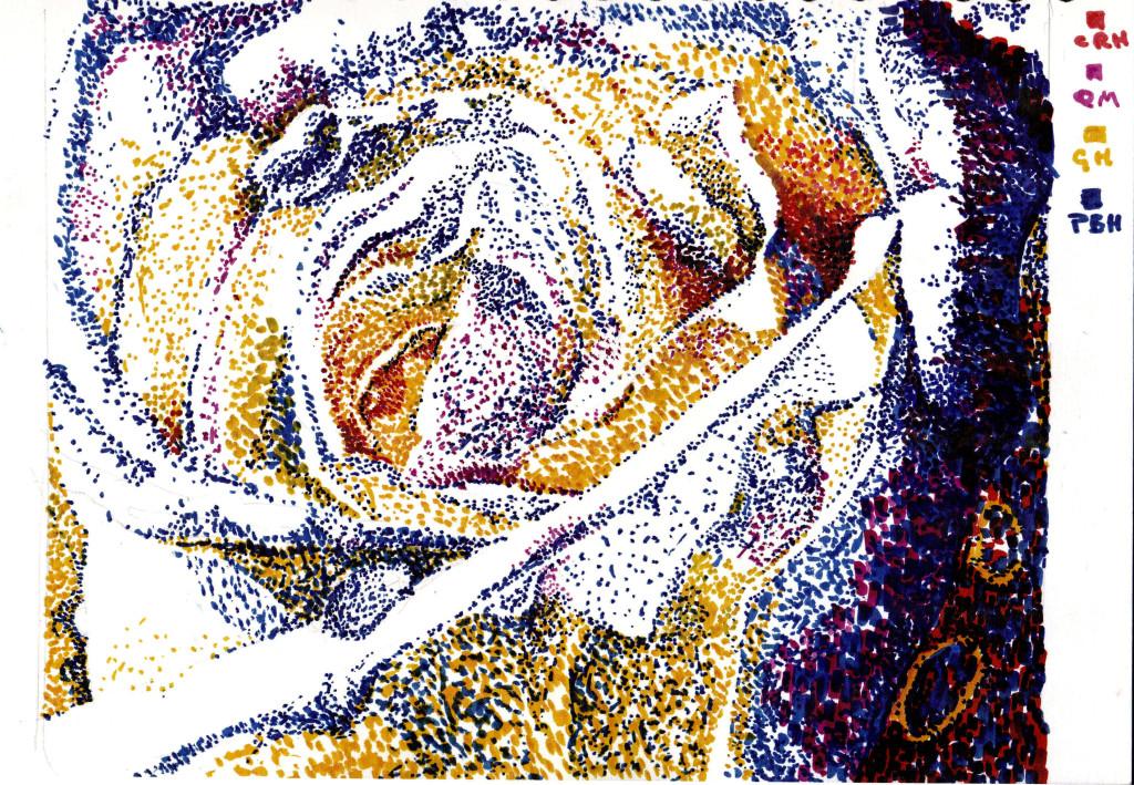 white rose peter hollis